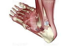 feet-img